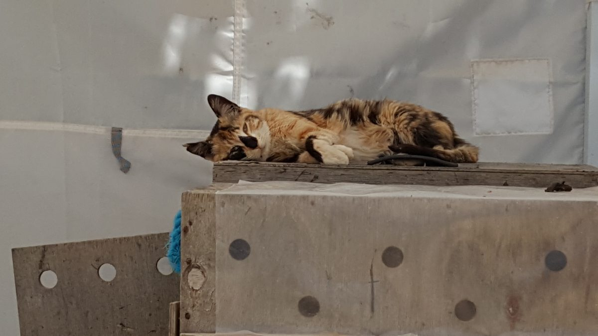 A rescued cat at Tala Monastery Cat Park in Cyprus.