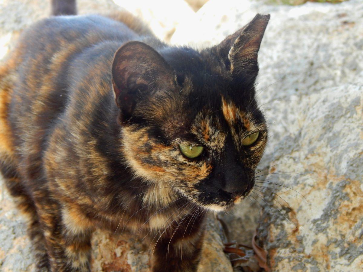 A feral cat in Cyprus.