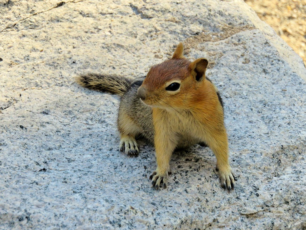 all the animals i saw in yosemite national park - sightseeing scientist